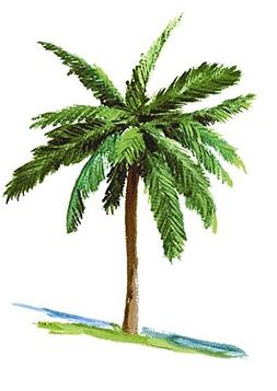 "6"" Palm Tree Palms Tropical Island Beach Removable Peel Self"